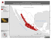 Mapa ilustrativo de Vireo hypochryseus (vireo dorado) residencia permanente. Distribución potencial.