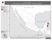 Mapa ilustrativo de Vireo magister (vireo yucateco) residencia permanente. Distribución potencial.