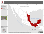 Mapa ilustrativo de Vireo olivaceus (vireo ojo rojo) tránsito. Distribución potencial.