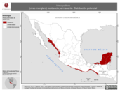 Mapa ilustrativo de Vireo pallens (vireo manglero) residencia permanente. Distribución potencial.