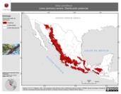 Mapa ilustrativo de Vireo plumbeus (vireo plomizo) verano. Distribución potencial.