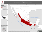 Mapa ilustrativo de Vireo plumbeus (vireo plomizo) invierno. Distribución potencial.