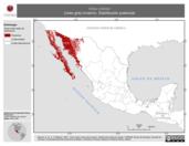 Mapa ilustrativo de Vireo vicinior (vireo gris) invierno. Distribución potencial.