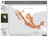 Mapa ilustrativo de Zenaida asiatica (paloma alablanca) usando sitios con y sin clima extremo. Distribución Potencial