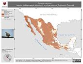 Mapa ilustrativo de Zenaida macroura (paloma huilota) usando sitios con y sin clima extremo. Distribución Potencial