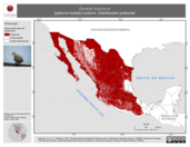 Mapa ilustrativo de Zenaida macroura (paloma huilota) invierno. Distribución potencial.