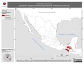 Mapa ilustrativo de Zimmerius vilissimus (mosquero ceja gris) residencia permanente. Distribución potencial.