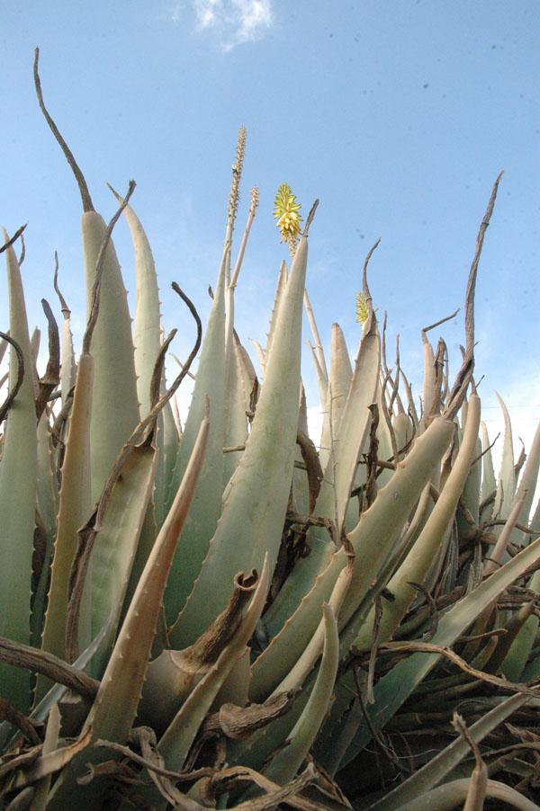 Aloe vera fotos - Almohadas de viscoelastica aloe vera ...